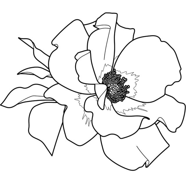 バラ(プレイボーイ):黒線バージョン