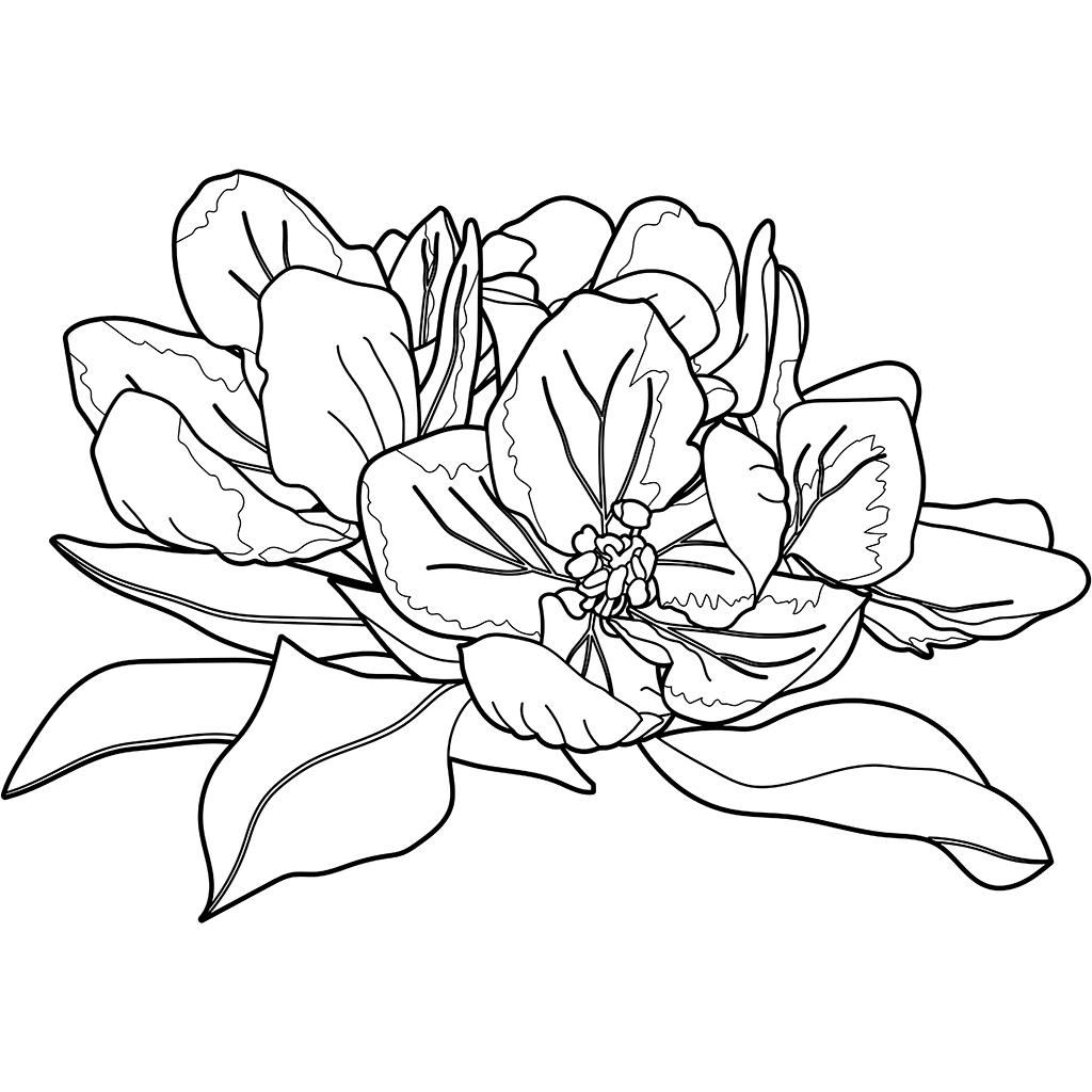 リンゴ(花):黒線バージョン