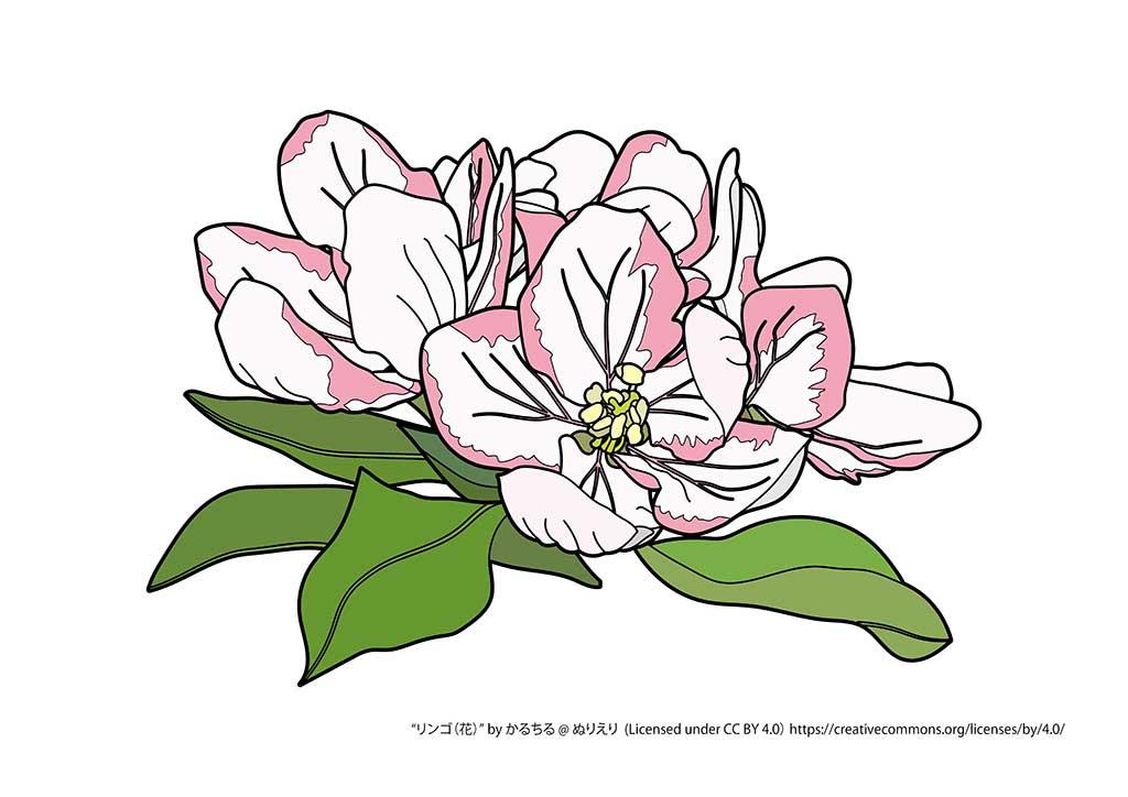 リンゴ(花)