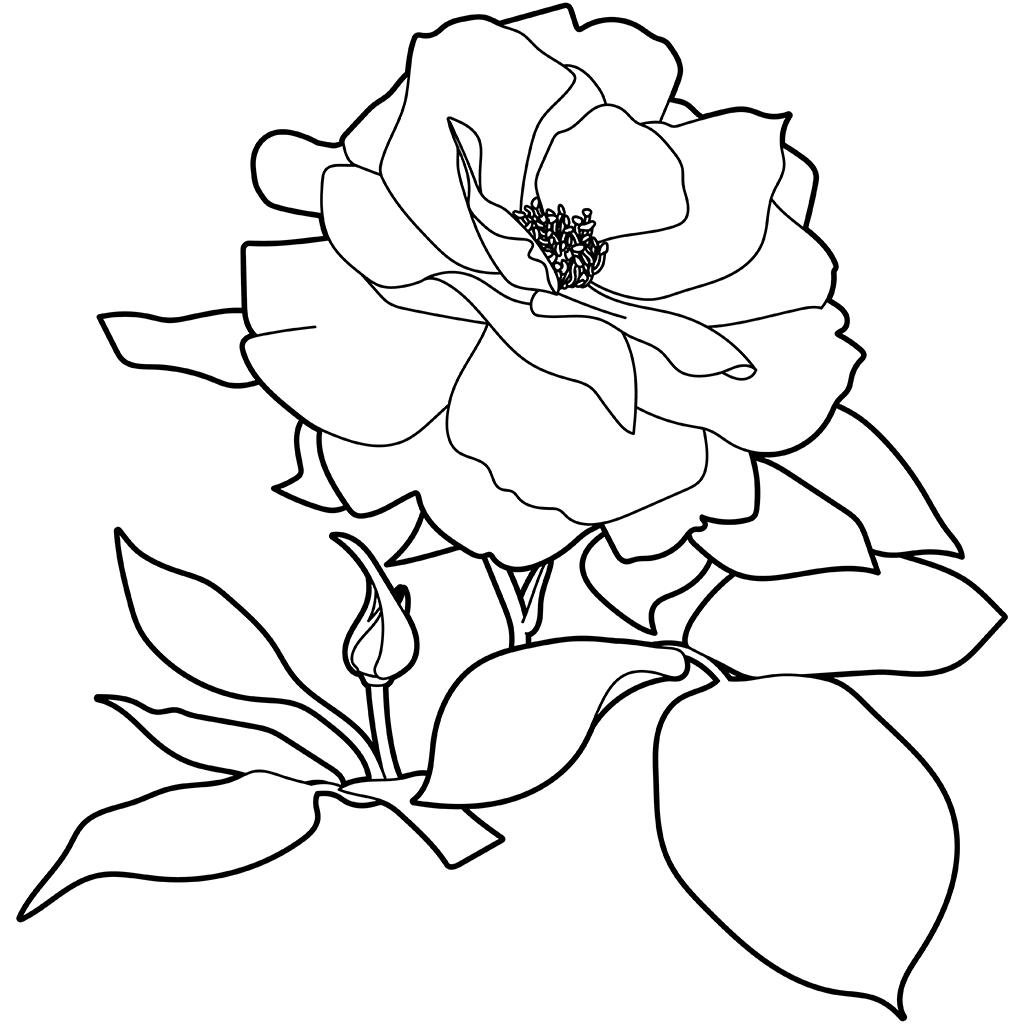 バラ(ヒロシマヘイワキネンコウエン):黒線バージョン