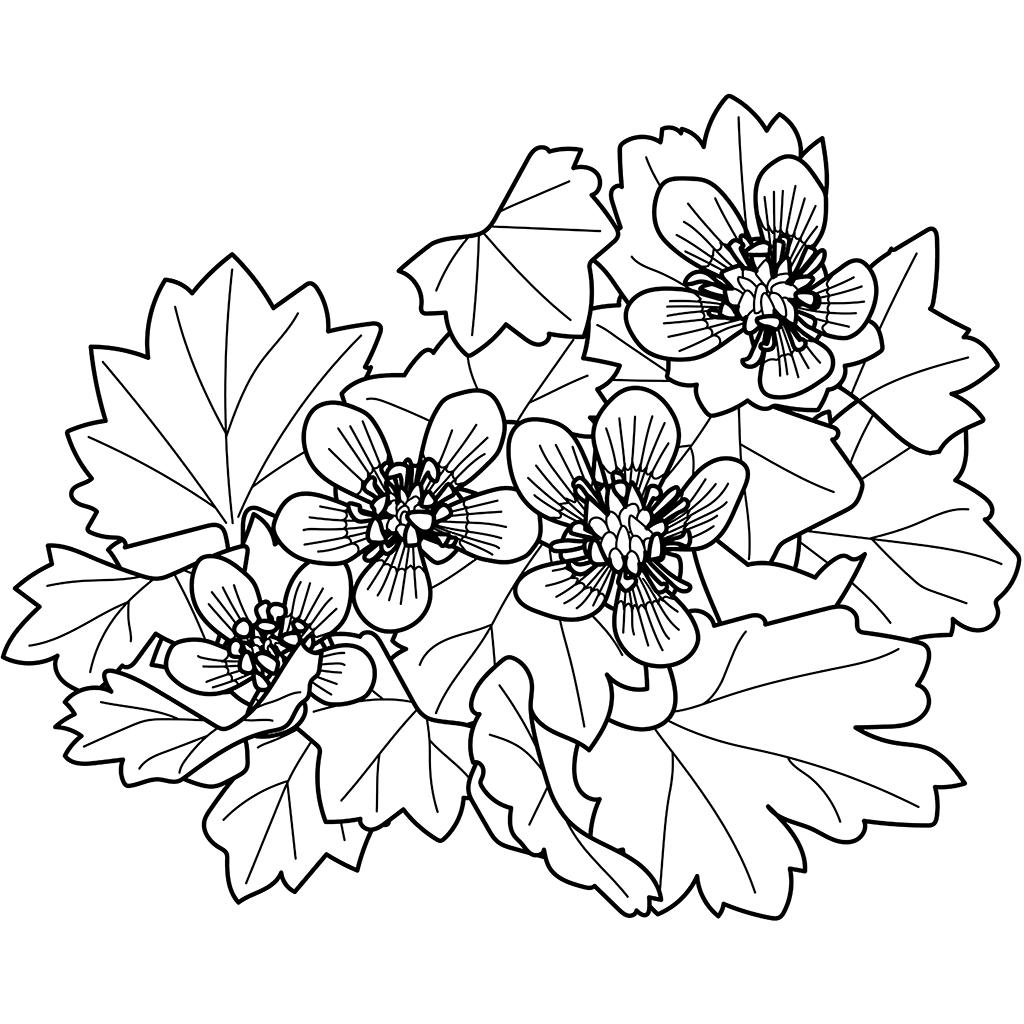 トゲミノキツネノボタン:黒線バージョン